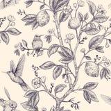 Modelo del bosquejo del vector con los pájaros y las flores Colibríes y flores, estilo retro, contexto de la naturaleza Monocromo ilustración del vector