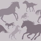 Modelo del caballo Imagenes de archivo