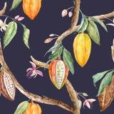 Modelo del cacao de la acuarela libre illustration