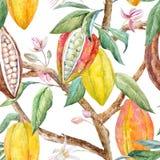Modelo del cacao de la acuarela ilustración del vector