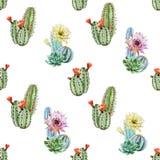 Modelo del cactus de la acuarela ilustración del vector