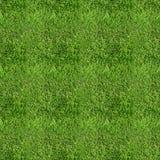 Modelo del campo de hierba verde Fotografía de archivo