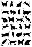 Modelo del CAT Imágenes de archivo libres de regalías