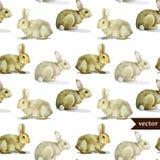 Modelo del conejo