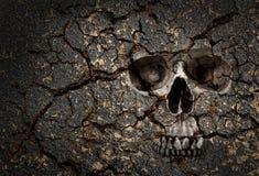 Modelo del cráneo en la pared agrietada fotografía de archivo libre de regalías