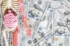 Modelo del cuerpo humano con los órganos esqueléticos e internos sobre dólar fondo del dinero Concepto del trasplante Costos del  foto de archivo