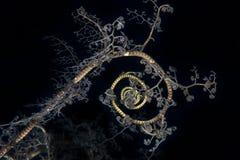 Modelo del espiral de la estrella de cesta imagenes de archivo