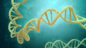 Modelo del filamento de la DNA stock de ilustración