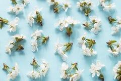 Modelo del flor de la primavera foto de archivo libre de regalías