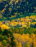 Modelo del follaje de otoño de Colorado Foto de archivo libre de regalías