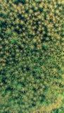 Modelo del fondo del musgo de la estrella Imagen de archivo