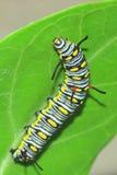 Modelo del gusano Fotografía de archivo libre de regalías