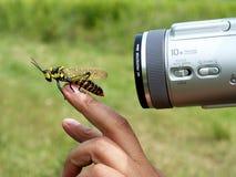 Modelo del insecto Fotografía de archivo