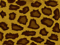 Modelo del leopardo Imágenes de archivo libres de regalías