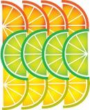 Modelo del limón y de la naranja rebanados -1 Imagen de archivo libre de regalías