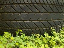 Modelo del neumático sobre la pequeña planta Fotos de archivo libres de regalías