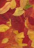 Modelo del otoño Imágenes de archivo libres de regalías