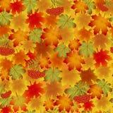 Modelo del otoño con las hojas de arce y el serbal Fotos de archivo