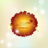 Modelo del otoño con las hojas translúcidas coloridas El círculo de a Imágenes de archivo libres de regalías