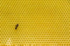 Modelo del panal con la abeja Foto de archivo