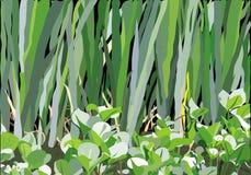Modelo del pantano Foto de archivo