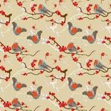Modelo del redbreast del petirrojo Imagen de archivo libre de regalías