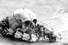 Modelo del ser humano del cráneo fotos de archivo libres de regalías
