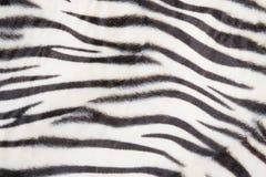 Modelo del tigre Imagen de archivo libre de regalías