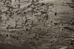 Modelo del tronco de árbol Imagen de archivo libre de regalías