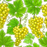 Modelo del vector de las uvas stock de ilustración
