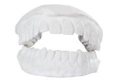 Modelo dental Foto de archivo