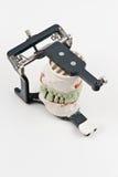 Modelo dental del injerto de la cera Fotos de archivo libres de regalías