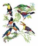 Modelo dibujado mano de la acuarela con las flores tropicales del verano de y los pájaros exóticos Foto de archivo libre de regalías