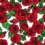 Modelo dibujado mano de las rosas Fotografía de archivo