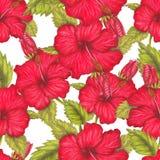 Modelo dibujado mano del hibisco rojo Foto de archivo