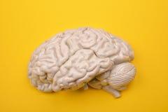 modelo do cérebro 3D humano de externo no fundo amarelo Imagens de Stock Royalty Free