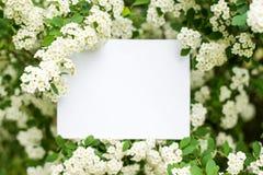 Modelo do cartão de papel nas flores brancas Fundo do ver?o com espa?o da c?pia foto de stock royalty free