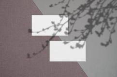 Modelo do cart?o Sombras de iluminação cobertas naturais as folhas Cart?es 3 polegada 5x2 Cena de sombras da folha imagens de stock