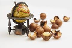 Modelo do globo e close up maduro das porcas de macadâmia Profundidade de campo pequena Fotos de Stock