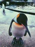 Modelo do pinguim imagem de stock
