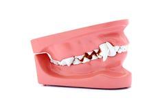 Modelo dos dentes de cão Fotografia de Stock Royalty Free