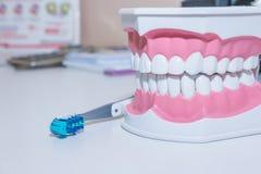 Modelo dos dentes e ferramenta dental no fundo branco Conceito saudável do cuidado vários tipos de escovas de dentes Sorriso boni imagem de stock royalty free