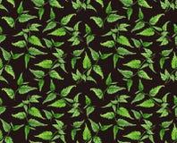 Modelo elegante de la rama verde ilustración del vector
