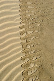 Modelo en la arena Foto de archivo libre de regalías