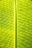 Modelo en las hojas del plátano Foto de archivo