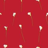 Modelo escaso de la cala en rojo Foto de archivo libre de regalías