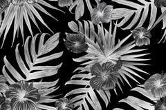 Modelo exótico blanco negro stock de ilustración