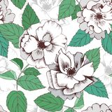 Modelo exhausto de la mano inconsútil de las rosas blancas para el diseño de la materia textil libre illustration