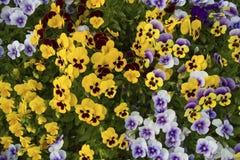 Modelo floral Fotografía de archivo