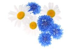 Modelo floral Imagen de archivo